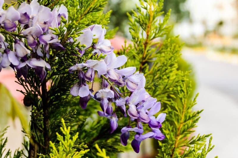 Flores púrpuras salvajes con el fondo suave del foco imágenes de archivo libres de regalías