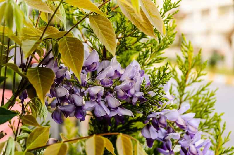 Flores púrpuras salvajes con el fondo suave del foco imagen de archivo libre de regalías