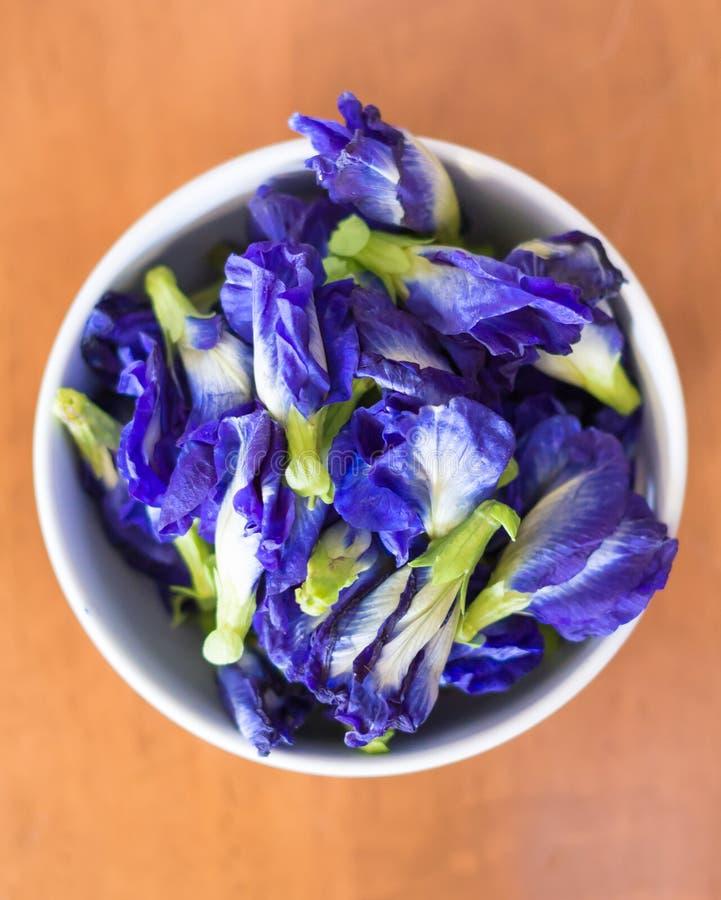 Download Flores Púrpuras Violetas Del Guisante De Mariposa, Pigeonwings Asiáticos Del Color Imagen de archivo - Imagen de azul, asia: 42440501