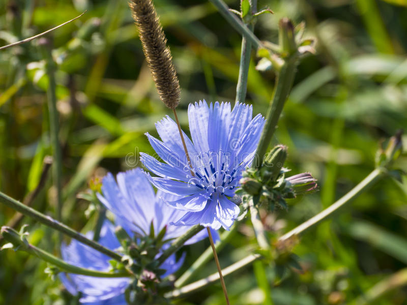 Flores púrpuras y azules fotos de archivo