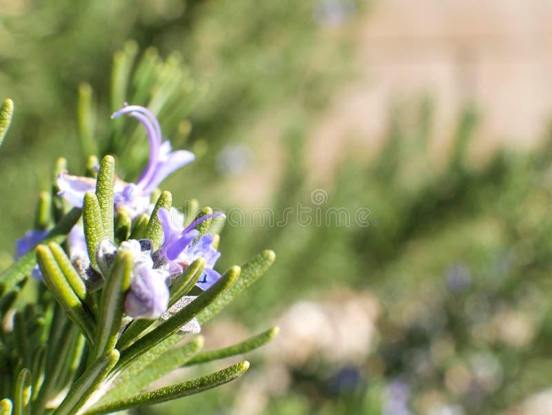 Flores púrpuras y hojas verdes en cierre soleado de la macro del campo para arriba imagenes de archivo