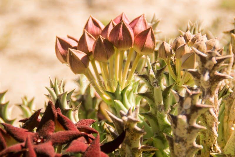 Flores p?rpuras brillantes frescas hermosas en el prado del verano fotografía de archivo libre de regalías