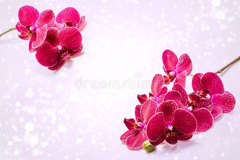 Flores p?rpuras coloridas de la orqu?dea Una rama de flores rojas foto de archivo libre de regalías