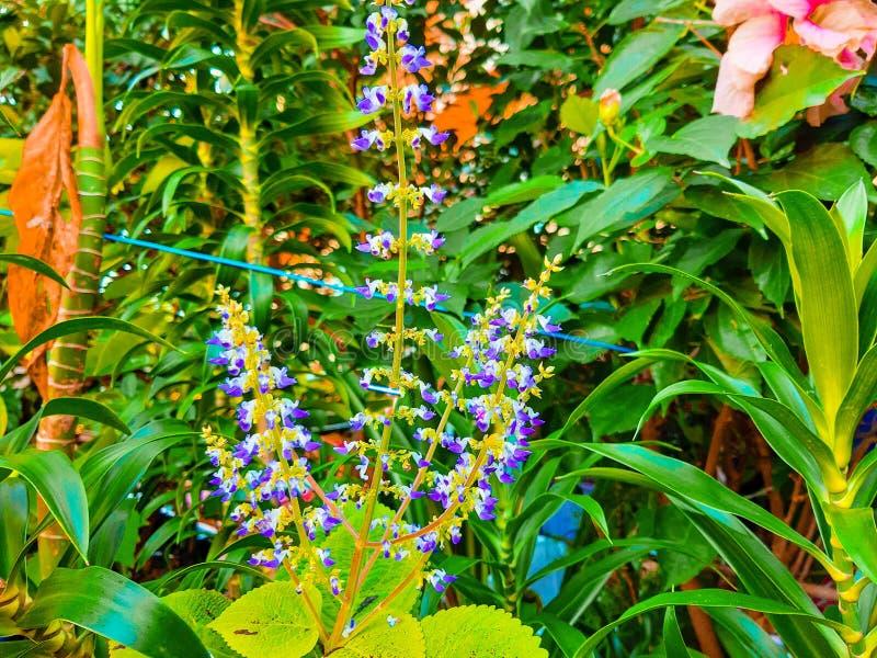 Flores p?rpuras fotos de archivo libres de regalías