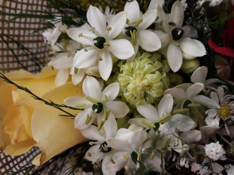 Flores para adornar su día imágenes de archivo libres de regalías