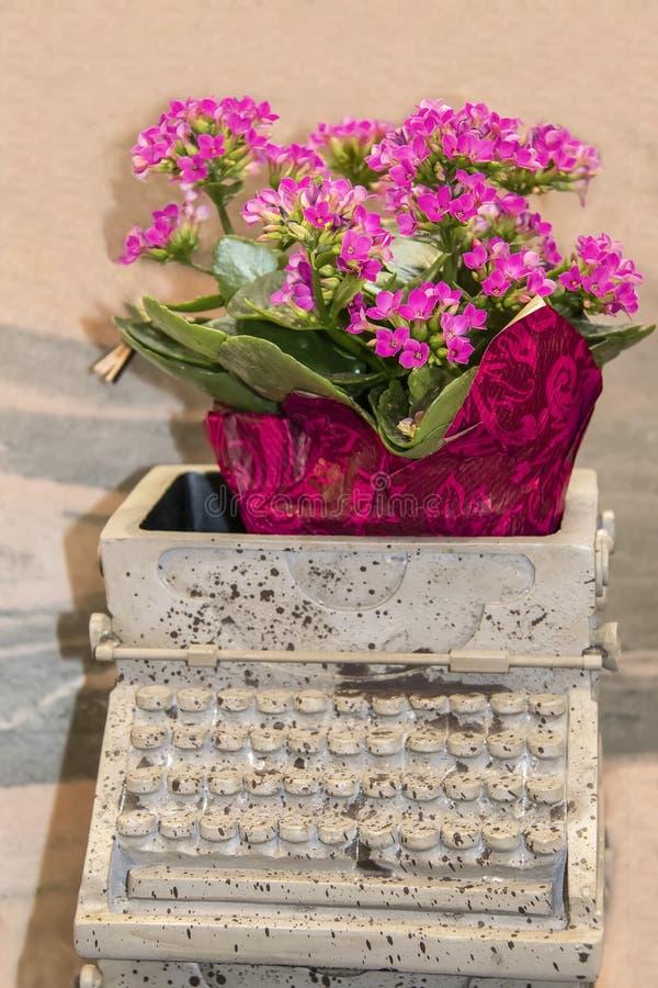 Flores para el escritor - un pote de flores rosadas se sienta dentro de un envase de cerámica hecho para parecer una máquina de e fotografía de archivo