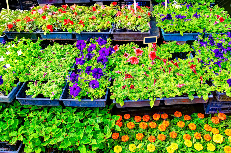 ¡Flores para la venta! fotos de archivo libres de regalías