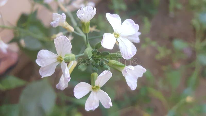 Flores para sempre no coração imagens de stock