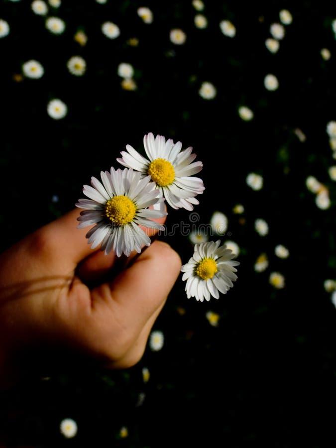 Download Flores para você foto de stock. Imagem de fundo, parque - 10051070