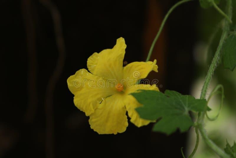 Flores pasadas foto de archivo libre de regalías