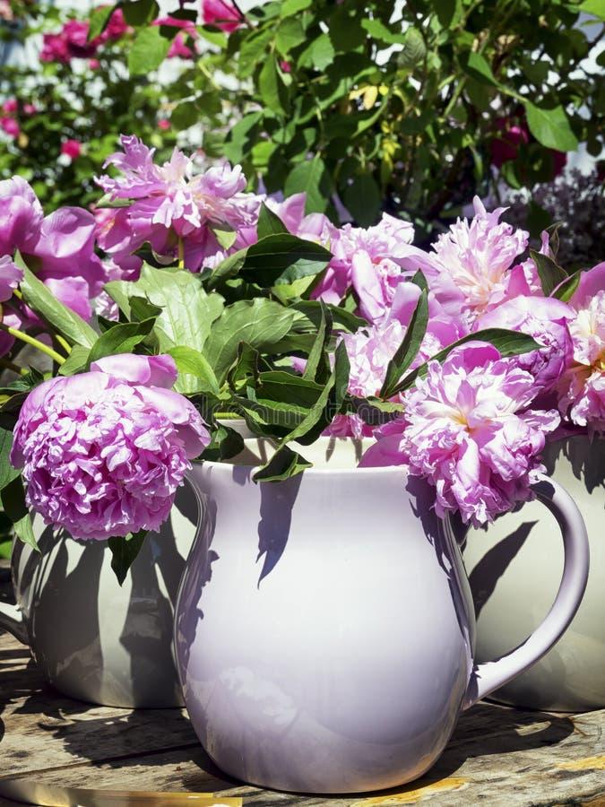 Flores - peônia imagens de stock royalty free