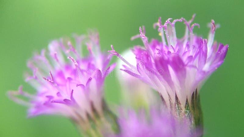 Flores pequenas fotografia de stock