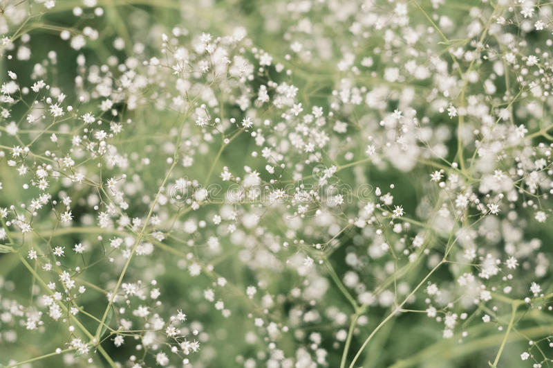 Flores pequenas imagens de stock