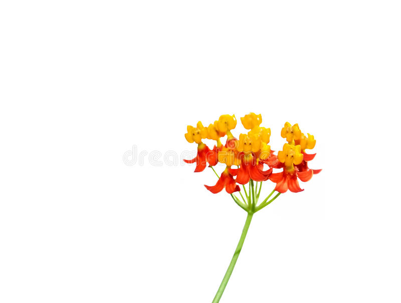 Flores pequenas borradas foto de stock royalty free