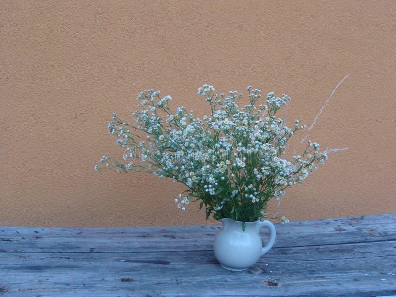 Flores pequenas brancas na tabela de madeira antiga imagem de stock