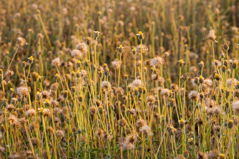 flores pequenas da grama em nivelar a luz solar fotos de stock