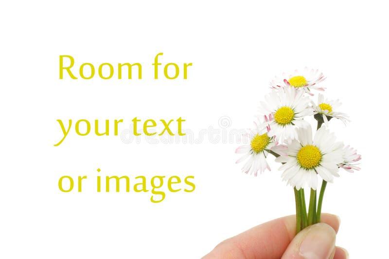 Flores pequenas da margarida imagem de stock