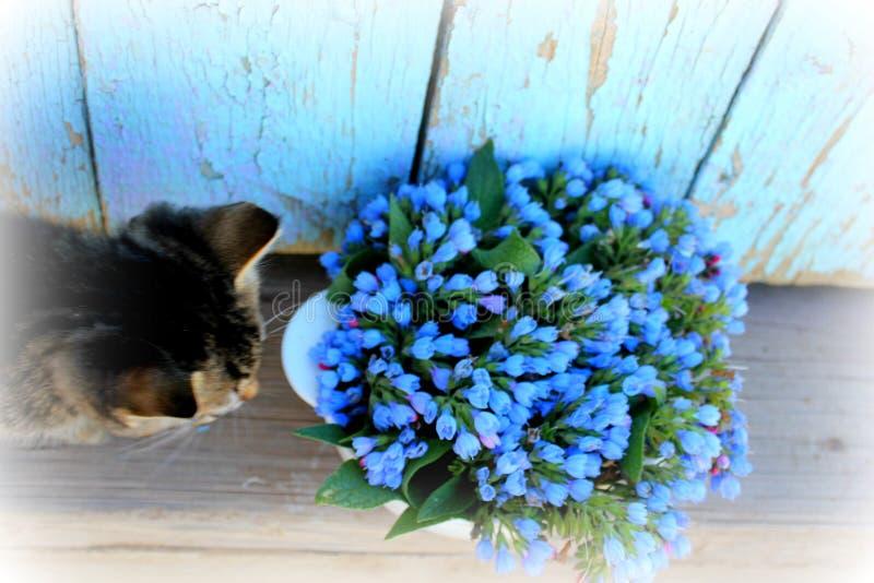 Flores pequenas e azuis do gato na bacia imagem de stock royalty free