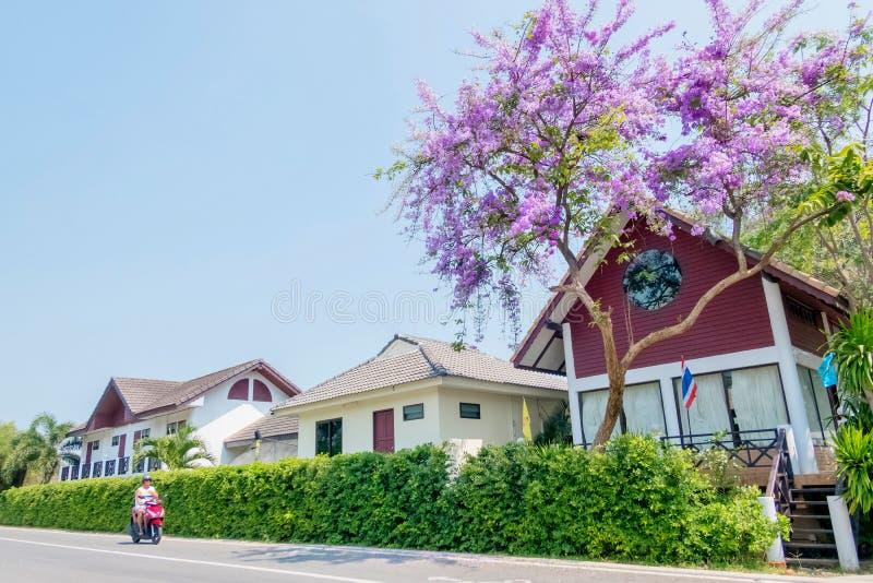 Flores pequenas roxas que florescem na árvore com fundo a do céu fotos de stock