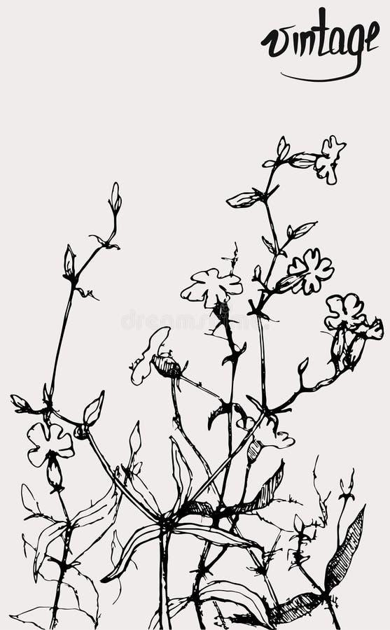 Flores pintadas do vetor foto de stock