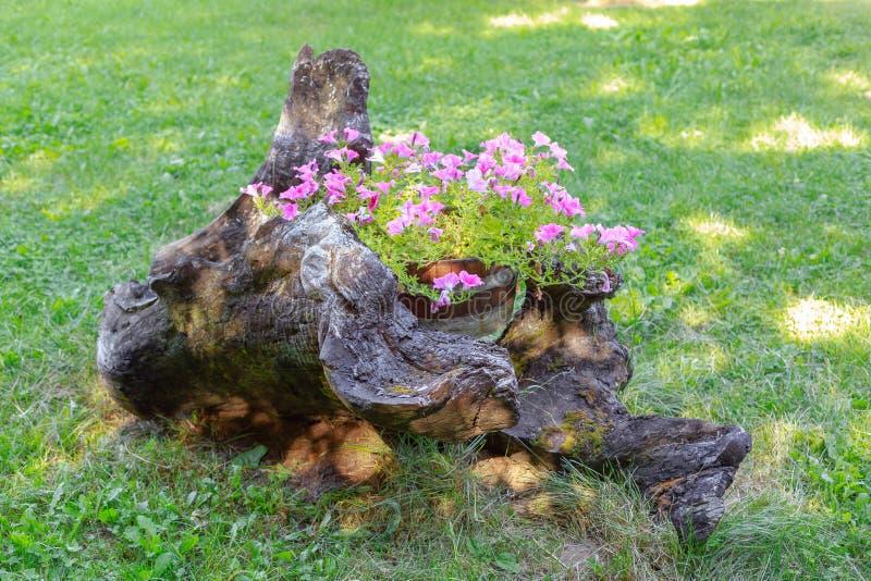 Flores plantadas em um tronco de árvore Arranjo floral na natureza foto de stock