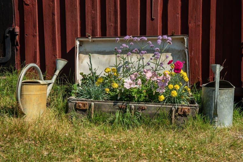 Flores plantadas em uma mala de viagem velha fotografia de stock