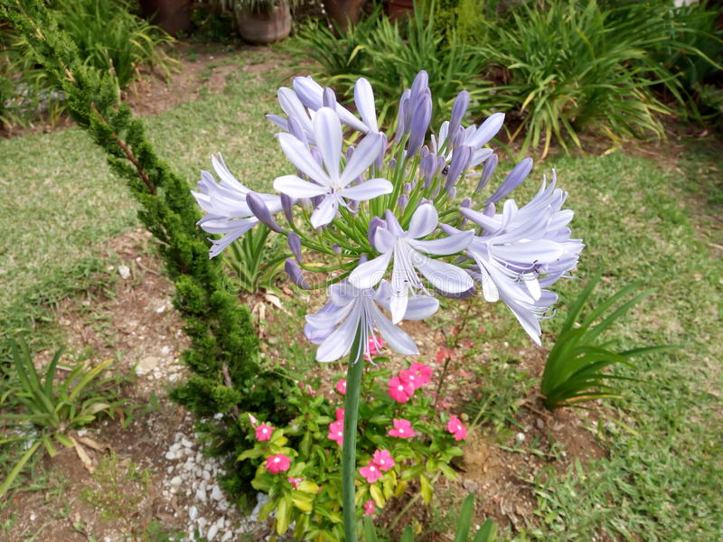 Flores & plantas foto de stock royalty free
