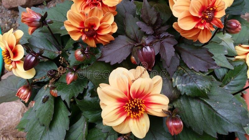 Flores por días fotografía de archivo libre de regalías