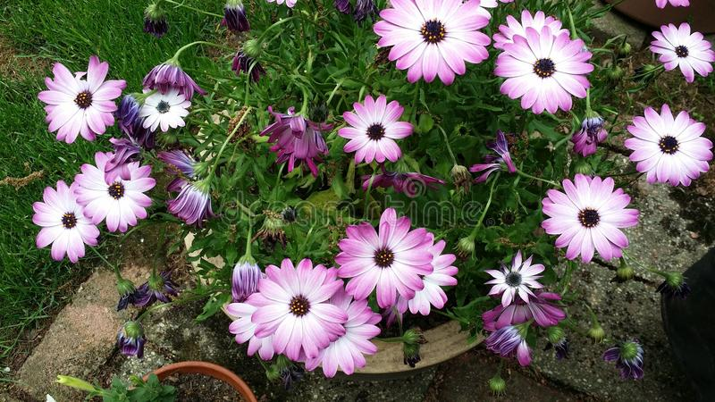 Flores por días fotos de archivo