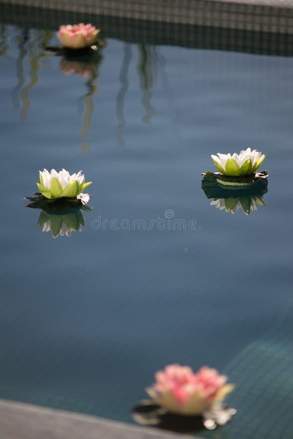 Flores por la piscina fotos de archivo