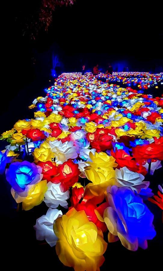 Flores por luz foto de stock royalty free