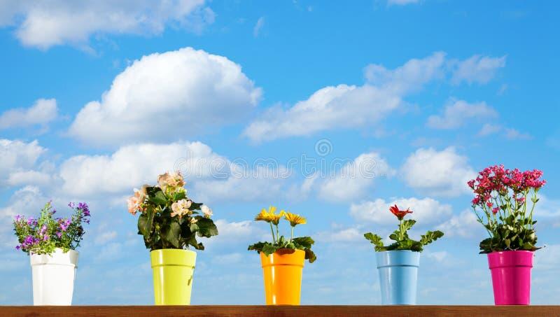 Flores Potted Fotos de archivo libres de regalías