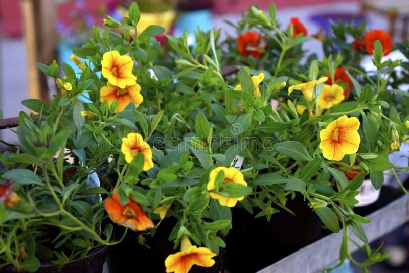 Flores Potted foto de archivo