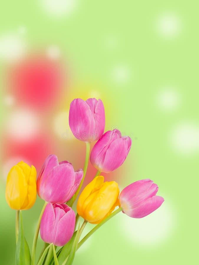 download flores preciosas foto de archivo imagen de hoja da 48232996 - Fotos De Flores Preciosas