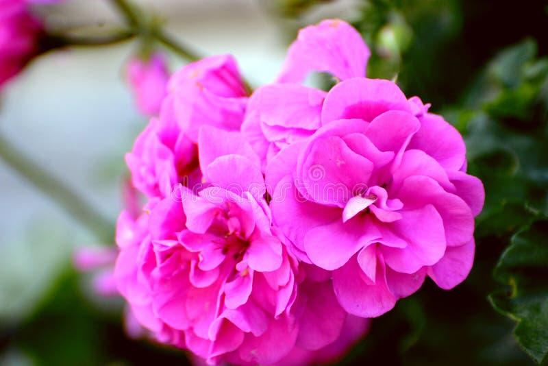 Flores preciosas foto de archivo Imagen de verano foto 85859772