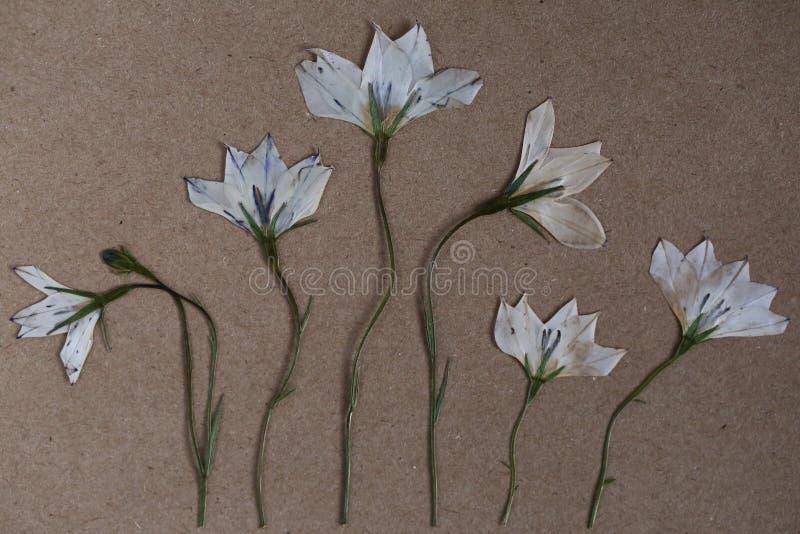 Flores presionadas imágenes de archivo libres de regalías