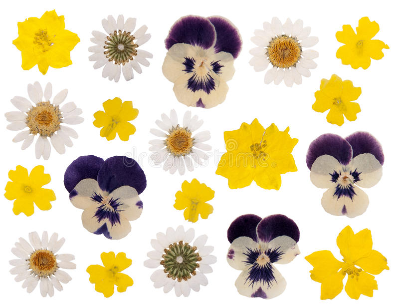 Flores presionadas fotografía de archivo