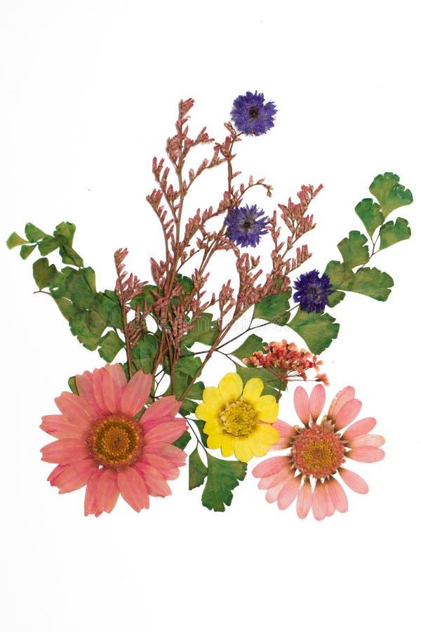 Flores presionadas foto de archivo libre de regalías