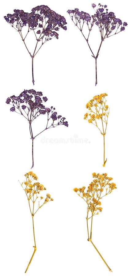 Flores presionadas, foto de archivo