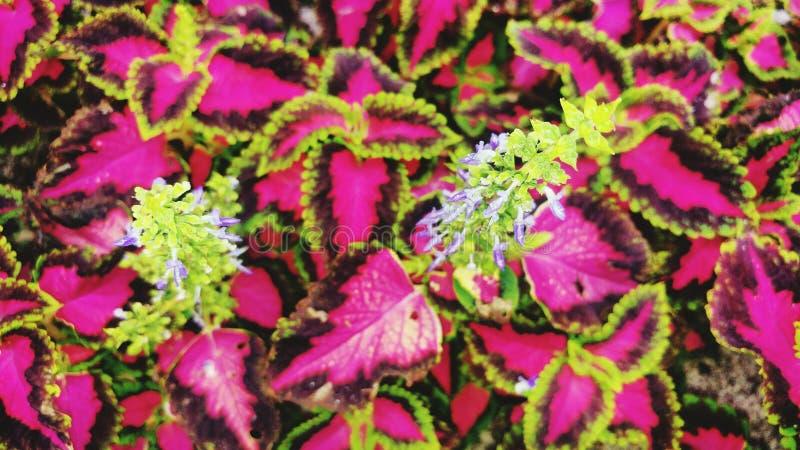 Flores puras fotografía de archivo
