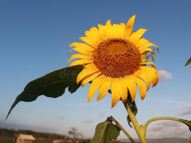 Flores que brillan independientemente imagen de archivo libre de regalías