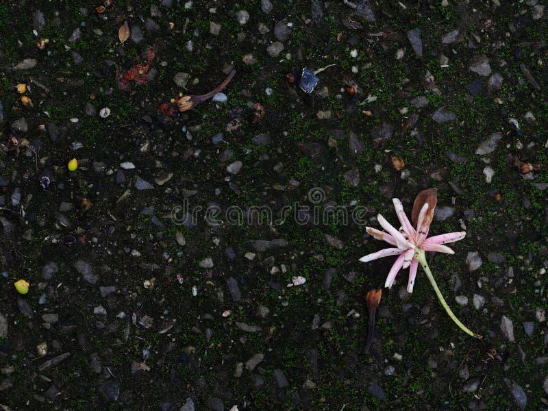 flores que caem na obscuridade - assoalho verde do musgo imagem de stock
