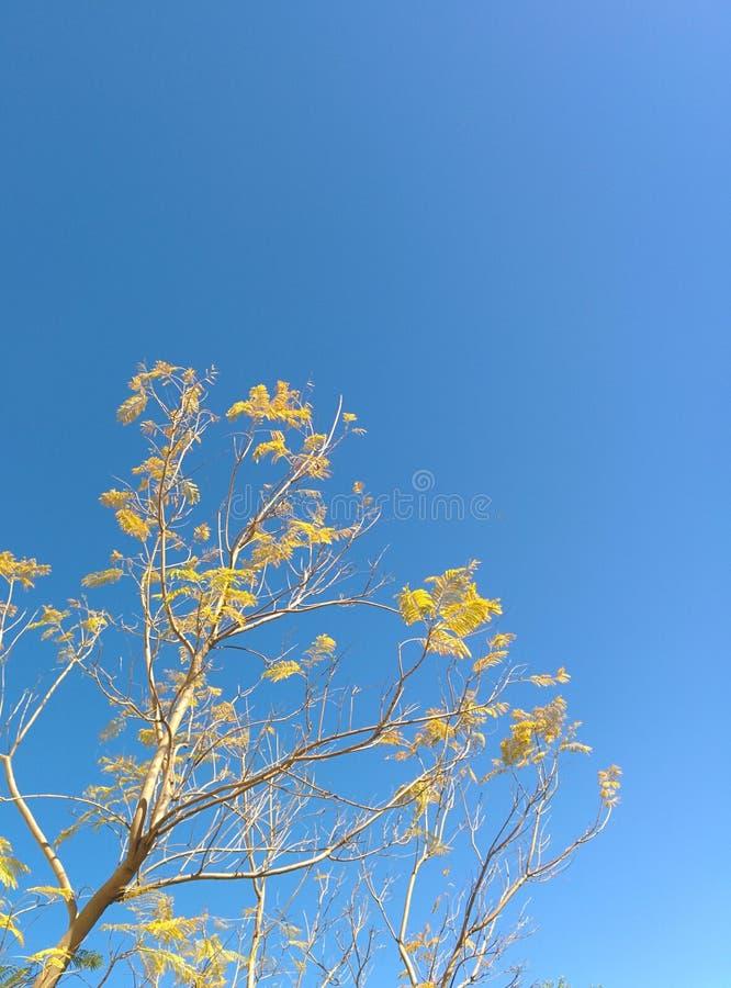 Flores que começam florescer cedo fotografia de stock royalty free