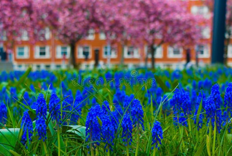 Flores que florescem no verão fotografia de stock royalty free