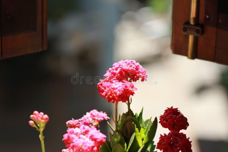 Flores que miran hacia fuera una ventana imágenes de archivo libres de regalías