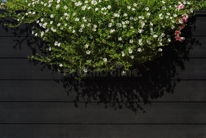 Flores que penduram na parede de madeira preta do café da rua com espaço da cópia foto de stock