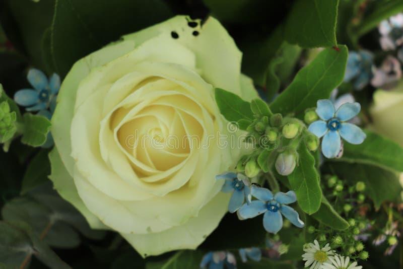 Flores que se casan blancas y azules fotos de archivo libres de regalías