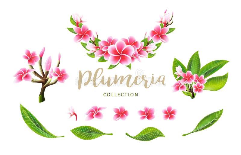 Flores, ramas tropicales y hojas del plumeria del rosa del vector fijadas para la tarjeta floral foto de archivo libre de regalías