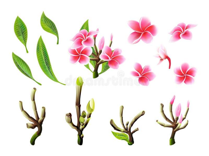 Flores, ramos tropicais e folhas do plumeria do rosa do vetor ajustados para o cart?o floral ilustração do vetor