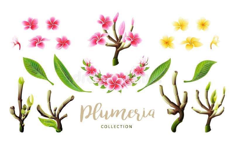 Flores, ramos tropicais e folhas do plumeria do rosa do vetor ajustados para o cart?o floral ilustração stock